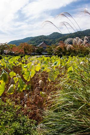 vicinity: Vicinity of Tenryu-ji Temple