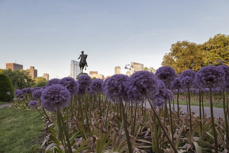 The George Washington Statue with Garlic Flowers Stock Photo
