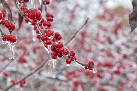 The Frozen Red Fruit