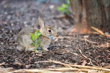 The Baby Rabbit