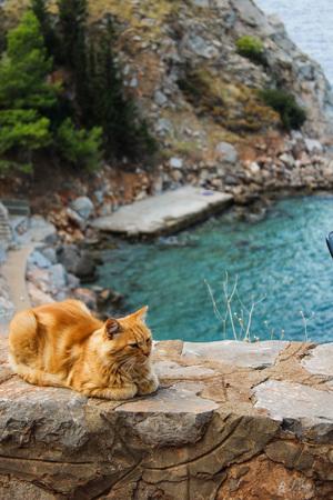 Cats of Hydra Stock Photo