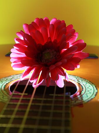 Chrysanthemum on guitar with background lighting