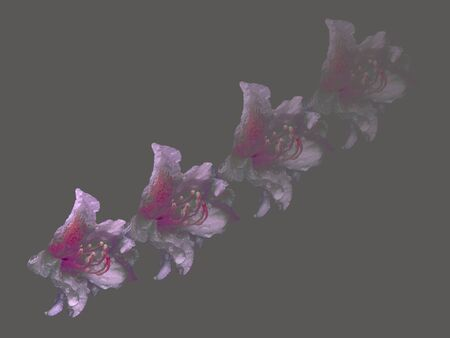 four flowers of an orchid that are slowly fading, showing that everything in life is fleeting