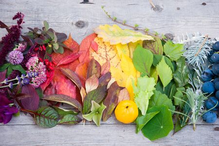 Autumn leaves and berries, Autumn background, Colors of Fall Stock fotó
