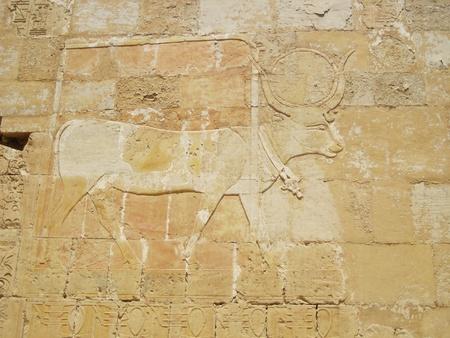 marsa: marsa alam, egypt