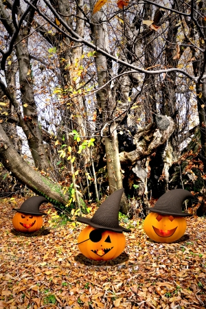 Halloween background with pumpkins and trees Stock Photo - 15716330
