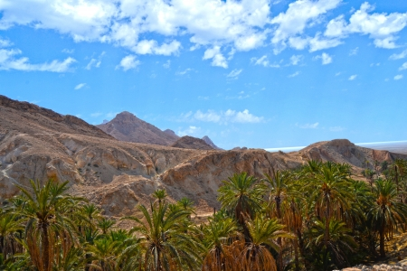 Canyons and palm trees - an Oasis of Nefta, Chebika, Tunisia  photo