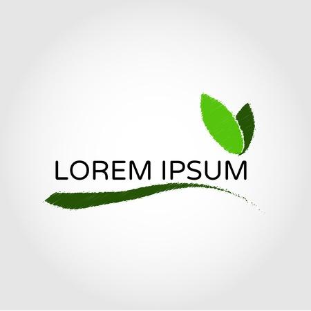 foglie ulivo: Ramo con foglie di ulivo