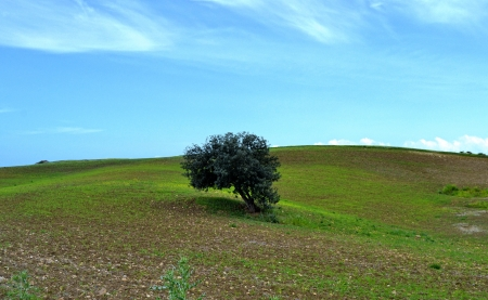 Natural Mediterranean landscape - Sicily photo