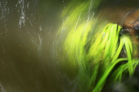 grasses: some grasses flowing in water