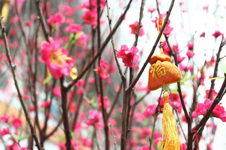 Chinese new year decoration--Yellow fortune bag and peach blossom Stock Photo - 6361382