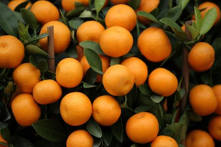 new age: many kumquat Stock Photo