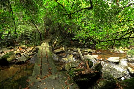 footbridge in forest  photo