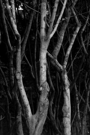 branch background, sadness tone photo