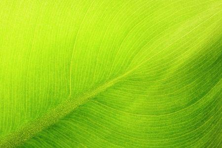 macros: leaf details