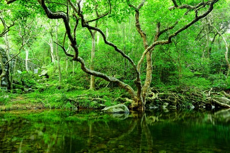 tree and water in jungle photo