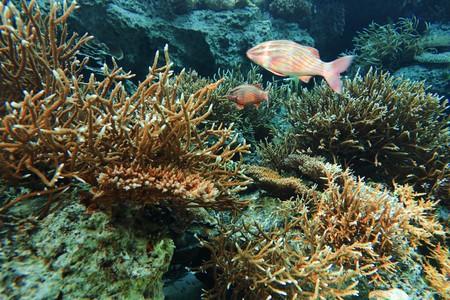 coral colony photo