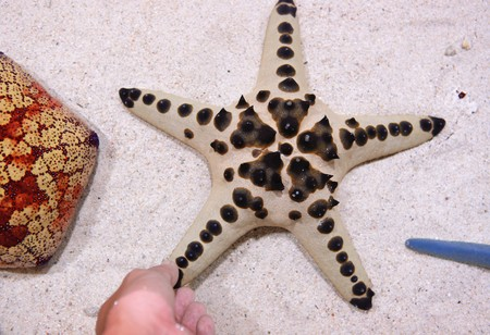 touch star fish Stock Photo - 7479604