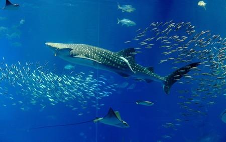 aquarium tank Stock Photo - 7574105