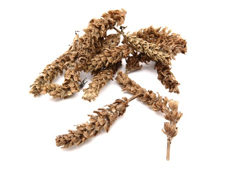 prunella: chinese herb, prunella vulgaris