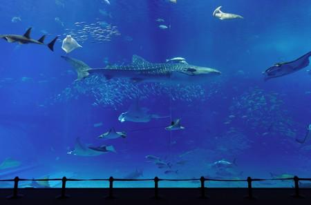 personas tomando agua: Acuario con tiburones ballena en Okinawa