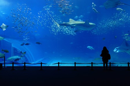 aquarium tank photo