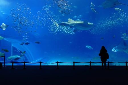 aquarium tank: aquarium tank