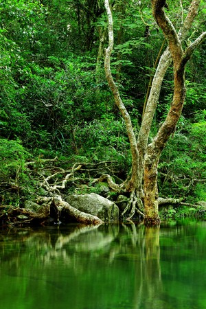 tree in forest photo