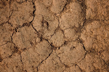 aridness: dry cracked earth