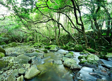 water spring in forest photo