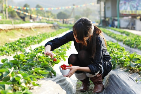 girl pick strawberry for fun in farm photo