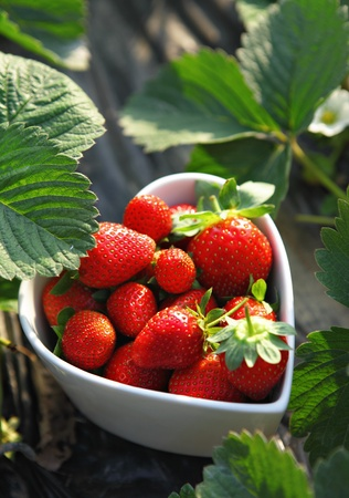 monoculture: strawberries in heart shape bowl