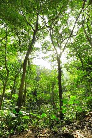 rainforest: Green forest with ray