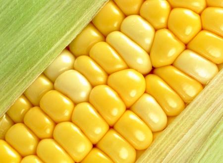 raw gold: corn close up