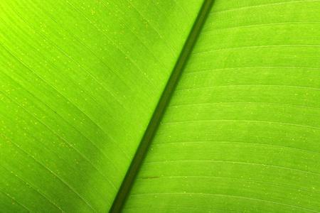 leaf close up photo