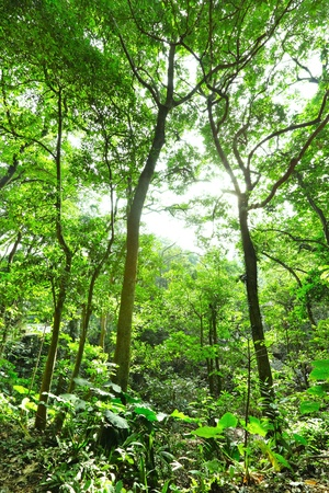 Fresh green forest with sunbeams photo