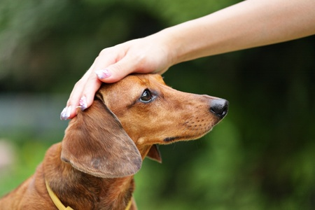 obedience: obedience dog Stock Photo