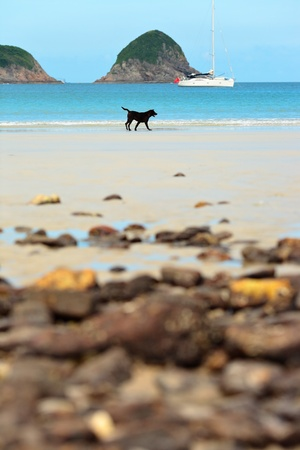 forced perspective: dog on beach