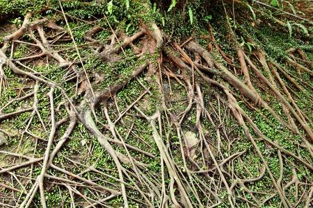 tree root photo