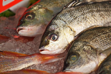 fish for sale Stock Photo - 10480625