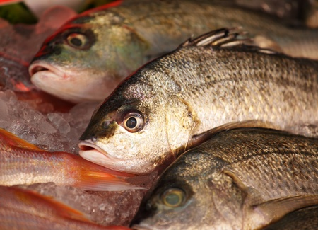 fish for sale Stock Photo - 10515955