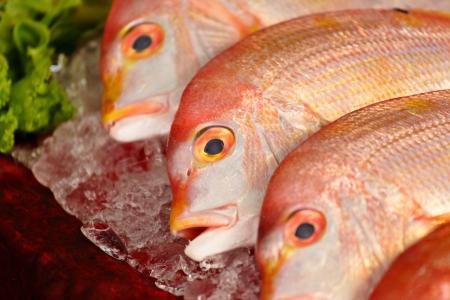 escamas de peces: peces en venta Foto de archivo