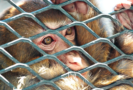 sad monkey in cage photo