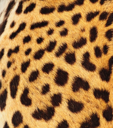 Real Leopard Skin photo