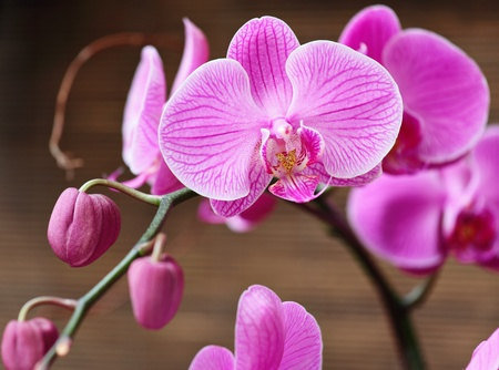 olant: Beautiful purple orchid Stock Photo