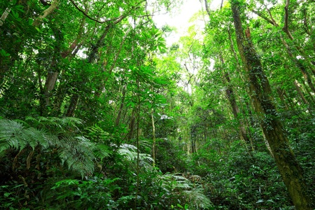 dense forest: green forest Stock Photo