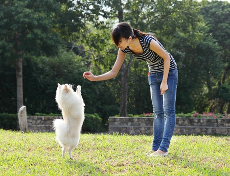 pomeranian: woman train her dog