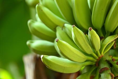 banana on tree photo