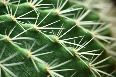 cactus close up photo