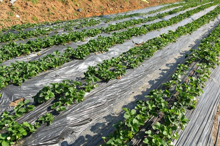 farm field Stock Photo - 11796562